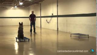 Dog Training In Maryland   Testimonial Dan And Kona