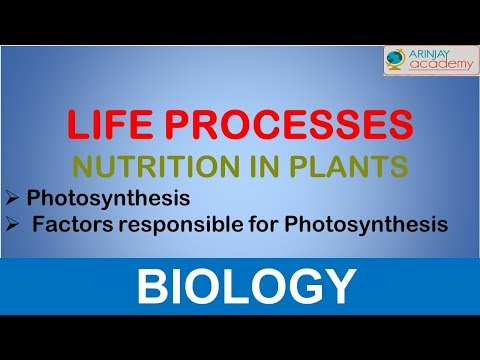 Nutrition in Plants -  Photosynthesis - Life processes - Biology (Class - 10)