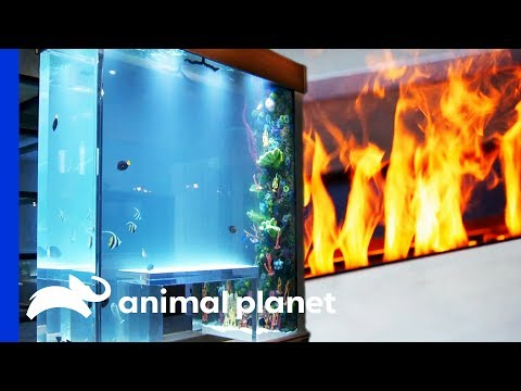 Fish Tank Combines Fire And Water In A Genius Way! | Tanked