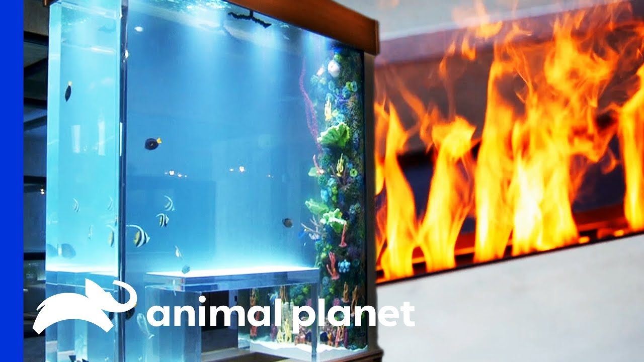 Download Fish Tank Combines Fire And Water In A Genius Way!   Tanked