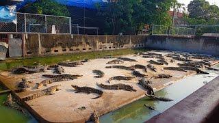 🐢 Зоопарк #2 ВАРАН