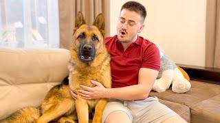 German Shepherd Talking with the Owner [Howls for the First Time]