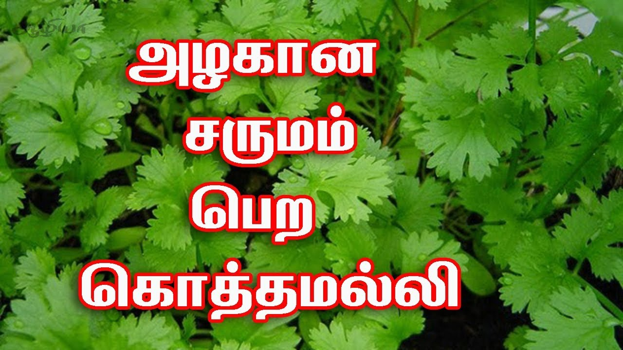 coriander leaves benefits for face in tamil | coriander