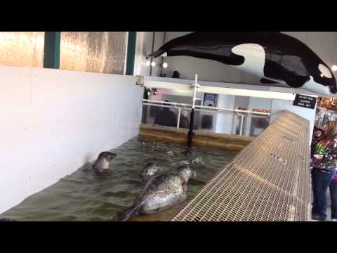 Seals At Seaside Aquarium #1