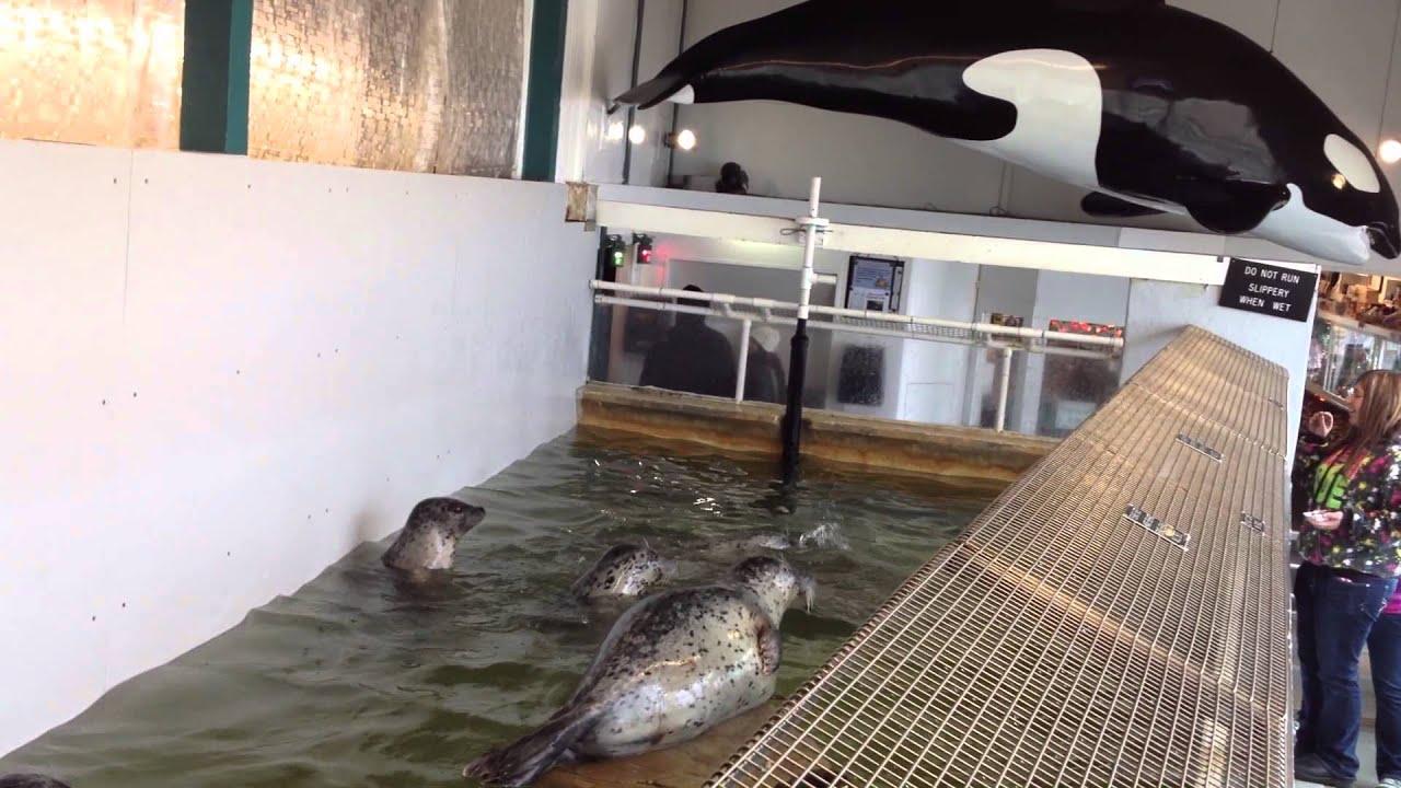 Image Result For Aquarium Oregon Seaside