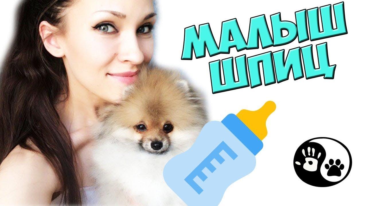 Info@moscow-minipes. Ru. Померанский шпиц. Пожалуйста, перед покупкой щенка, обязательно приезжайте на него посмотреть. Цена: 18 000 руб.
