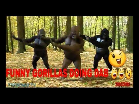 Funny Gorillas doing Dab