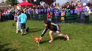 Chicken racing it could only happen in Ireland