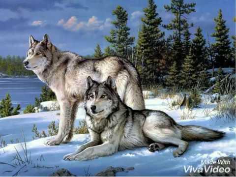 Красивые фото животных зимой-для моих подписчеков