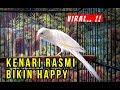 Riview Kenari Rasmi Yang Jadi Buruan Kenari Mania Indonesia  Mp3 - Mp4 Download