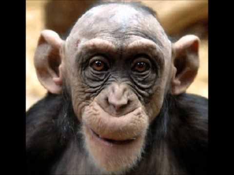 Funny van Dannen /der Affe