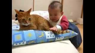Вот для чего у кота хвост