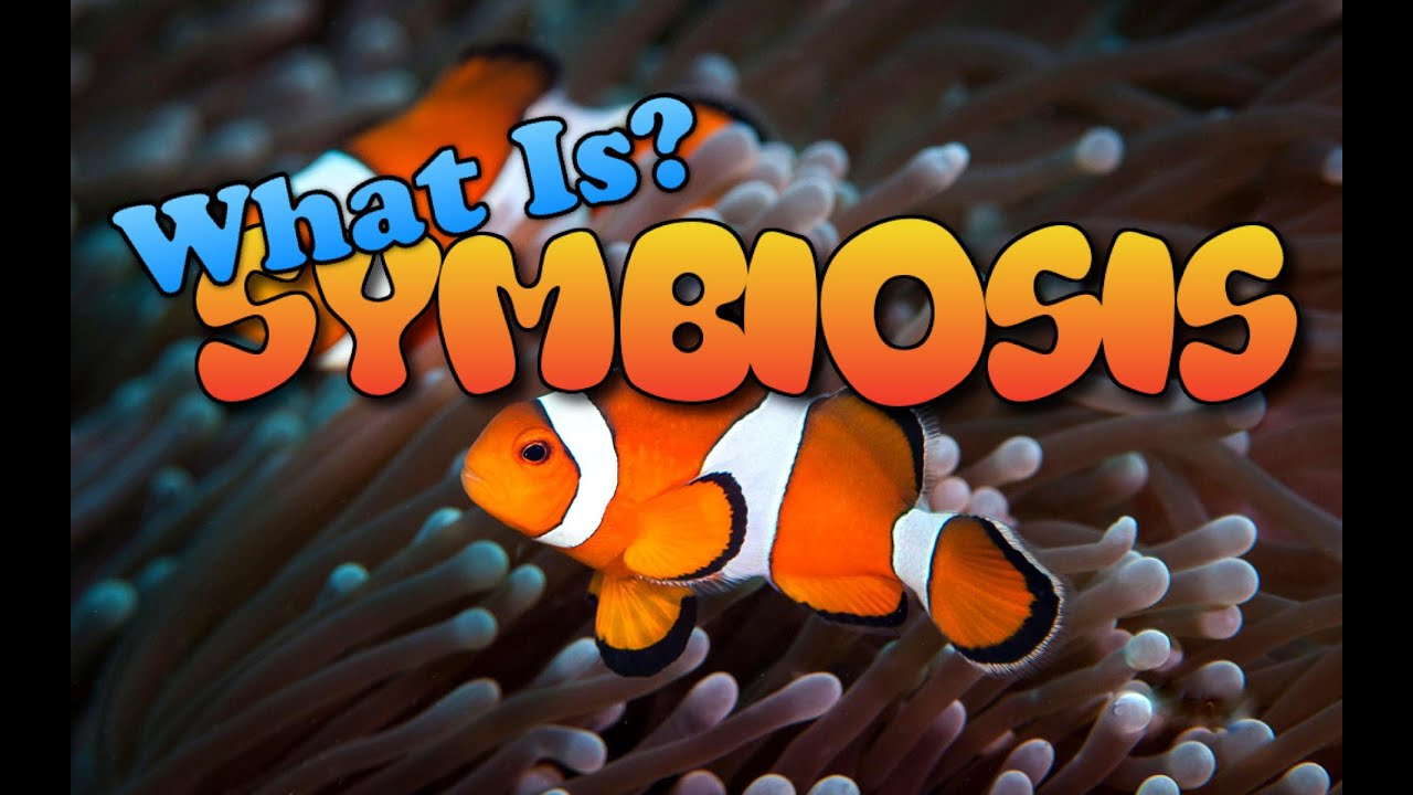 What Is Symbiosis Youtube