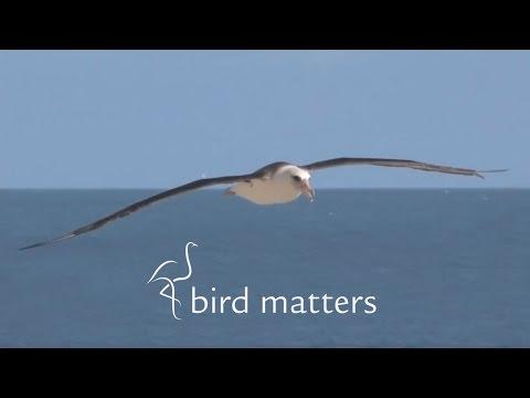 Catch Fish Not Albatross – BirdMatters S01E11