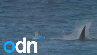 Surfer fights off shark attack on live TV