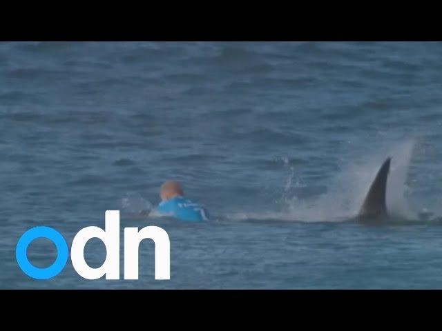 Surfer fights off shark attack on live TV