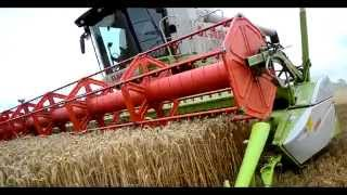 Żniwa 2014 steblewo claas lexion 770 haasefarm