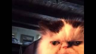 Cat says diabetes vine