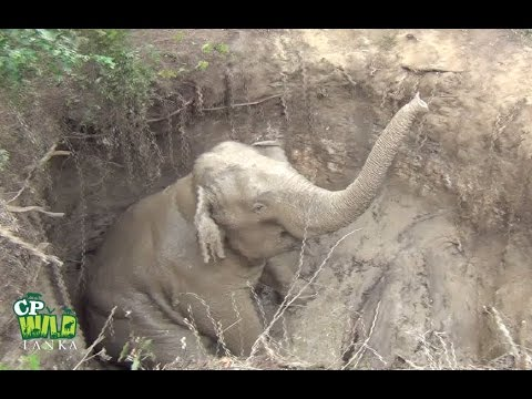 This elephant rescued from a well !