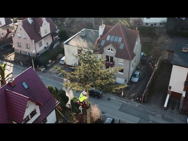 Wycinka i pielęgnacja drzew Gdańsk - Gdynia - Sopot