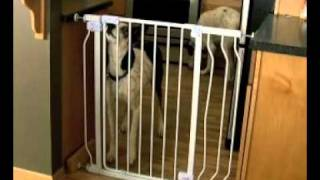 Dog Vs. Baby.....gate.mov