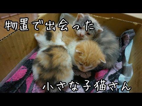 物置で出会った子猫たち 子猫を拾ってみた2017 I picked up a kitten!