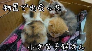 物置で出会った子猫たち 子猫を拾ってみた2017 I picked up a kitten! thumbnail