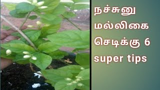 how to maintain jasmine plant in tamil|how to grow jasmine plant|tips increase flowering jasmine