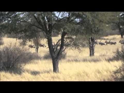 UNDER AFRICAN SKIES PLAINS GAME HUNTING DVD