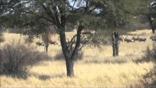 UNDER AFRICAN SKIES PLAINS GAME HUNTING DVD INTRO