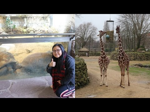 VISITING AMSTERDAM ZOO AND ANNE FRANKS HOUSE   Amsterdam Vlog Part 2