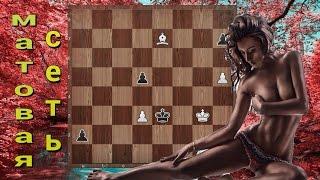 Этюд братьев Платовых. Матовая сеть. Уроки шахмат для начинающих.