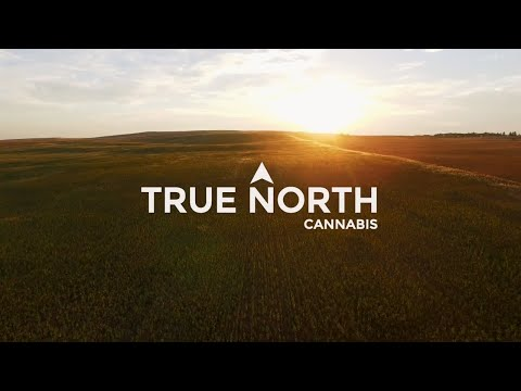 True North Cannabis - Introduction