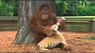 Приколы про обезьян