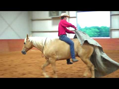PLATINUM RANCH HORSE |