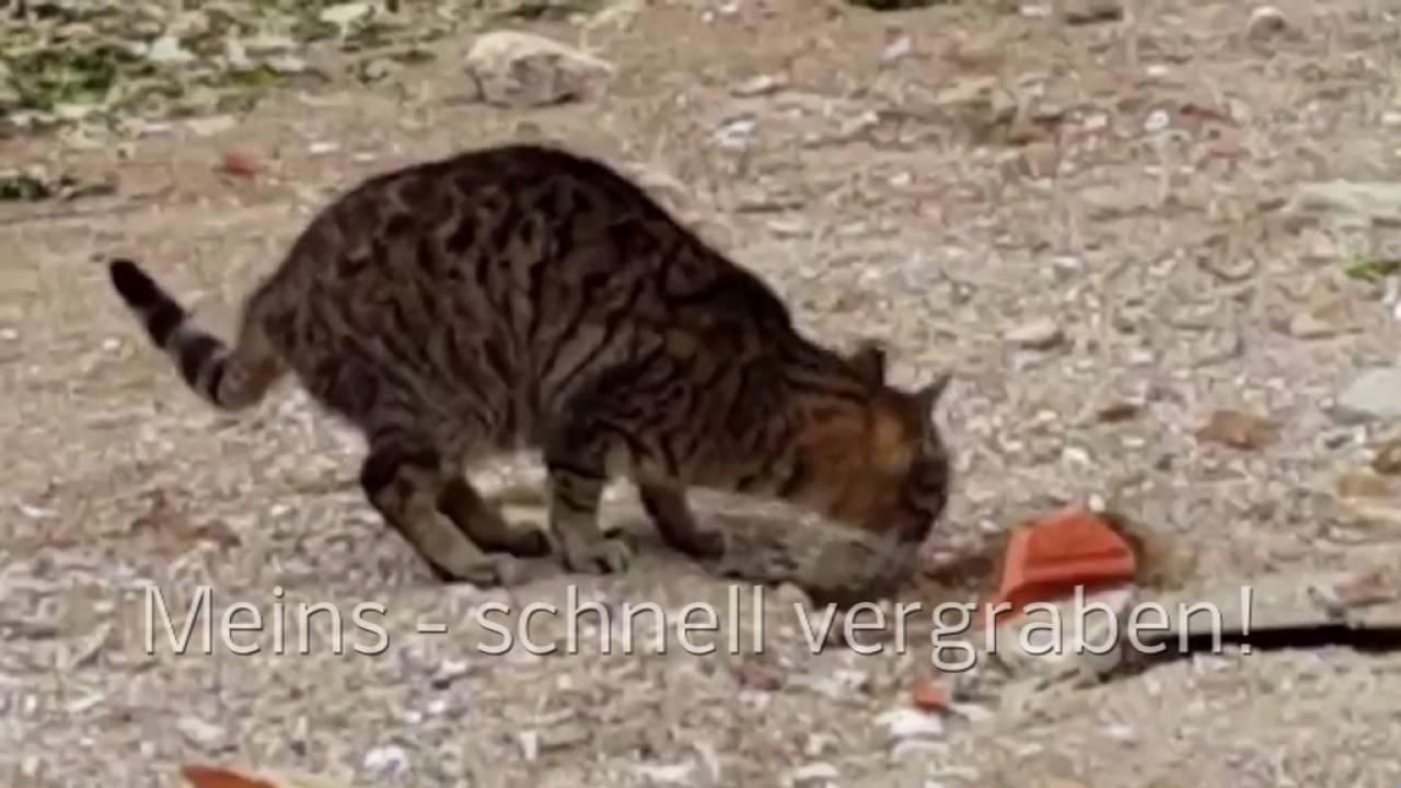 Was Hilft Gegen Katzenkot U2013 DEFKA