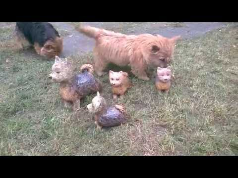 New kids on the block - Ceramic norwich terriers.
