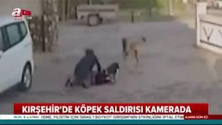 Kırşehir'de kız öğrenciye pitbul saldırısı video