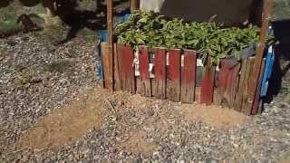 Moringa Trees And Planter Boxes Made From Palettes