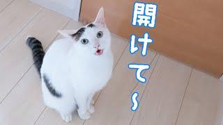 大好きな姉猫の居場所を教えてくれる弟猫チロさん