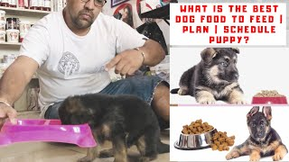 German Shepherd Diet Chart | What is the Best Dog Food to Feed | Plan | Schedule Puppy? Bhola Shola
