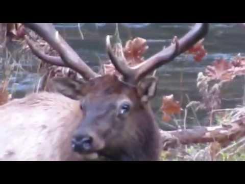 A trip to Elk County Pennsylvania - Part 1
