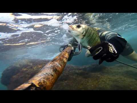Shallow Water Spearfishing