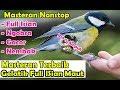Kompilasi Masteran Gacor Khusus Untuk Gelatik Batu Dan Burung Kecil Masteran Terbaru  Mp3 - Mp4 Download
