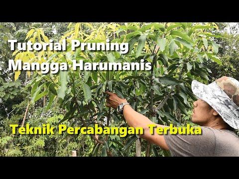 HARUMANIS PERLIS / KEDAH MAJALAH 3 2019 from YouTube · Duration:  17 minutes 27 seconds