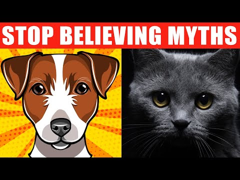 24 Pet Myths You Should Stop Believing