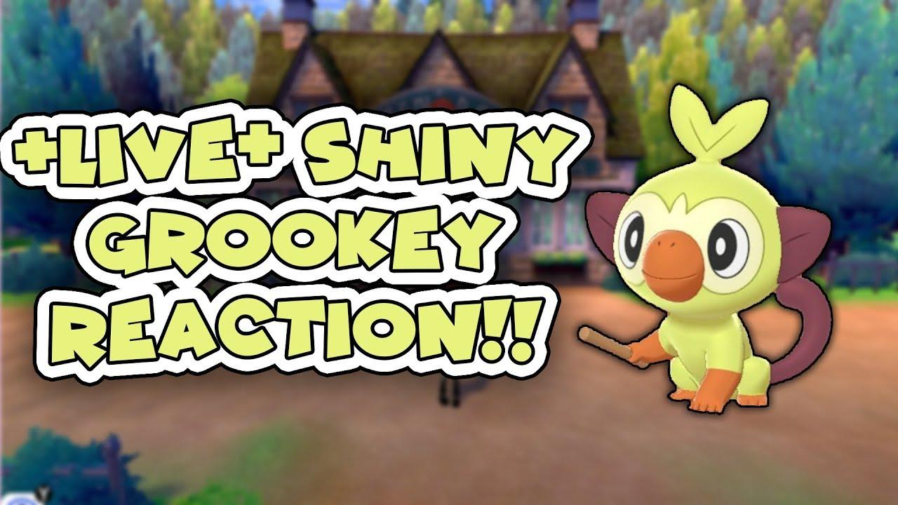 Shiny Grookey Starter Pokemon In Pokemon Sword And Shield 425 Eggs Via Masuda Method By Justplaypokemon It S About Fun Today, i show you guys some recent shiny highlights of mine in pokemon go! shiny grookey starter pokemon in