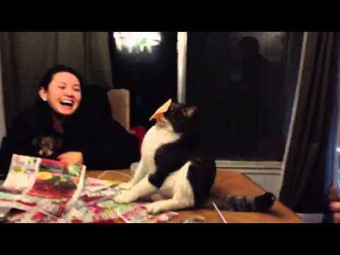 CHEESE CAT !
