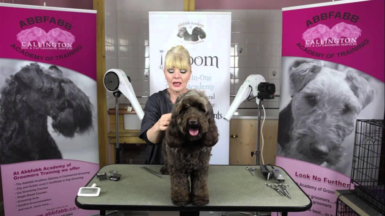 Abbfabb Academy Of Dog Grooming