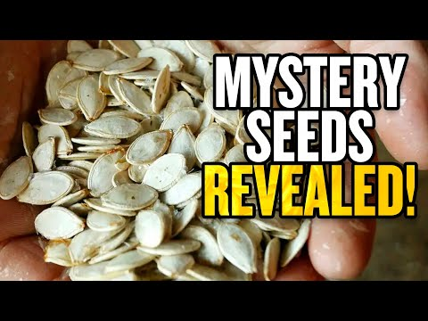 IDENTIFIED: Mystery Seeds from China